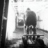 Mijnwerker op mijnfiets op de gemoderniseerde 105 meter verdieping van de Willem Sophia Mijn
