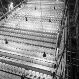 Cokesbatterijen in aanbouw op Cokesfabriek Emma 2