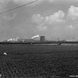 Landschap met op de achtergrond de Cokesfabriek Maurits