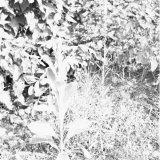 Plantengroei op de Steenberg van de Staatsmijn Wilhelmina