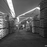 Opslagloods met Stamylanprodukt van de HD Polyethyleenfabrieken op het Polychemiebedrijf