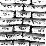 Zakken met Lysine in de Organische Fabrieken