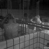 OVS-ers in het badlokaal op de Staatsmijn Hendrik