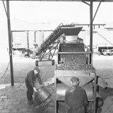 Kolenverlaadmachine op de opslagplaats van Lens Aandewiel en Dijck te Den Haag